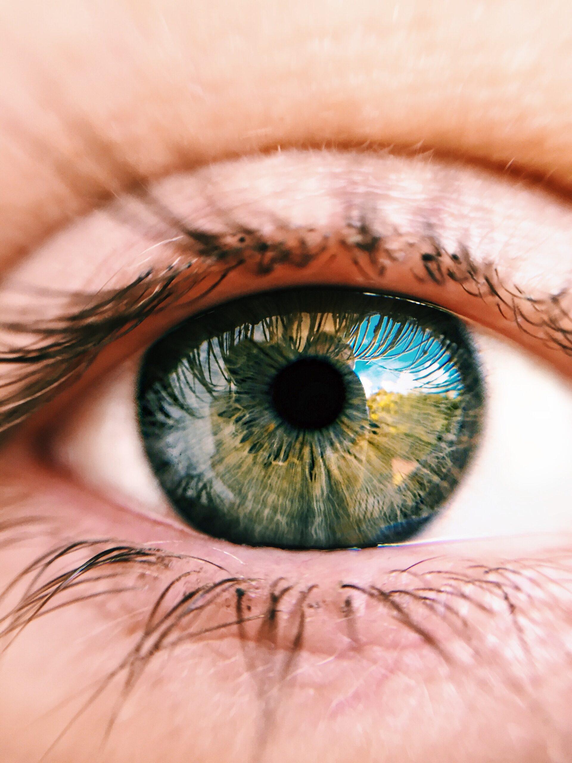 tipos de ojos
